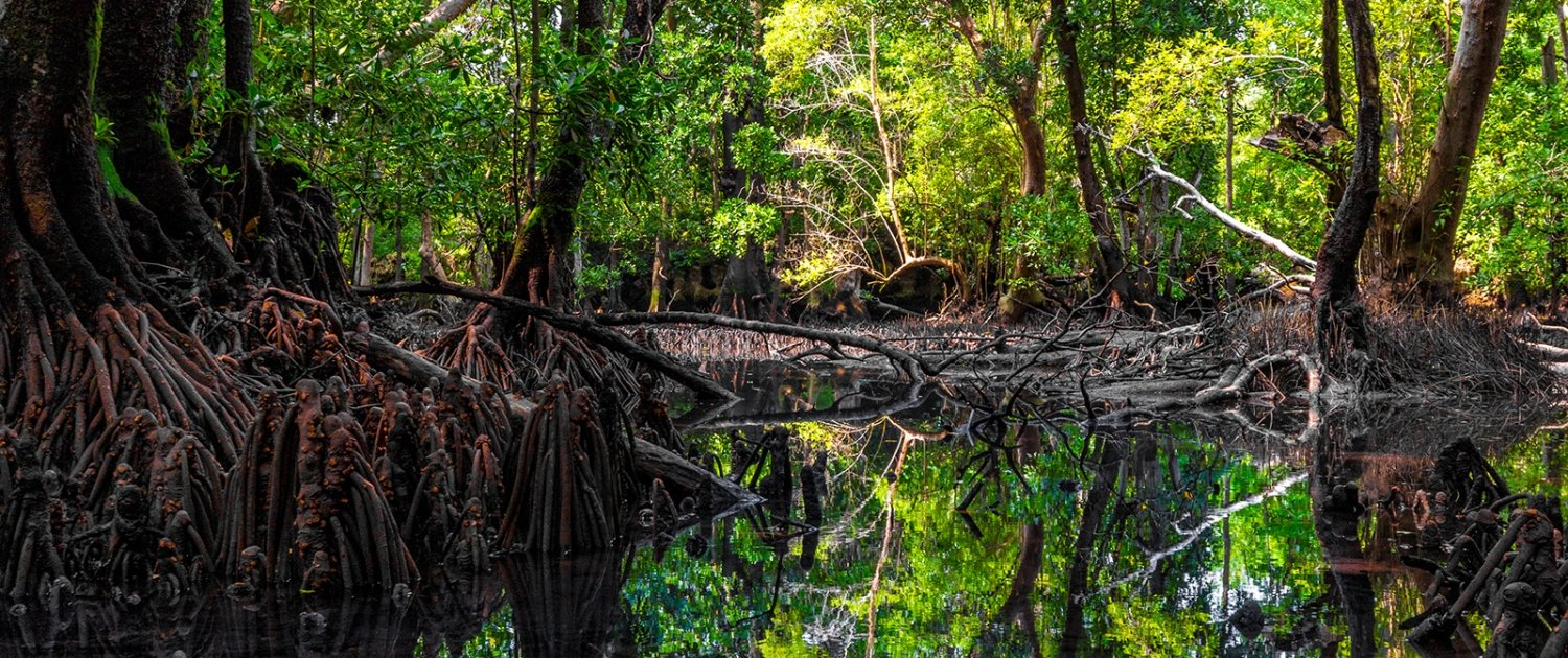 Mangrove forest on Chale Island