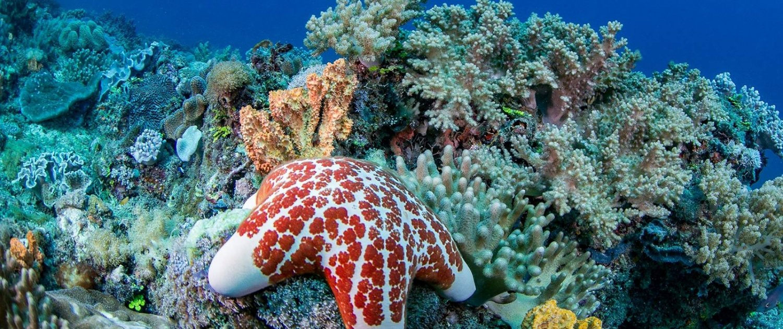 Marine life around Kenyan south coast